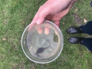 Tadpole in a container